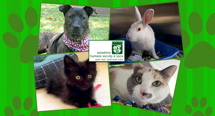 Darcy! Midnight! Huck! Dot!  Meet Our Pets of the Week