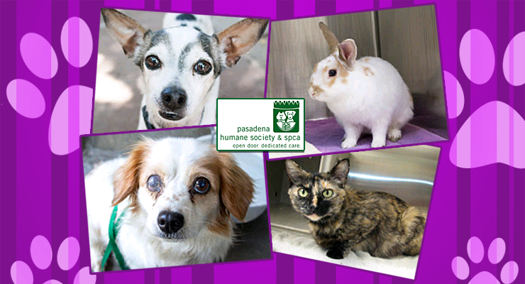 Tofu! Tiffani!  Toby!  Dorothy! Meet Our Friendly Pets of the Week