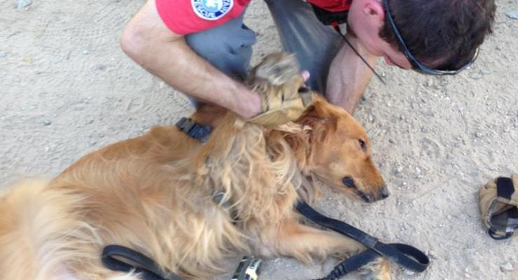 Altadena Mountain Rescue Responds to the Call of Stricken Four-Legged Victim