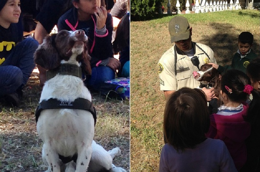 "Altadena Students Meet Several Sheriff's Dogs for ""Hero's"" Week"